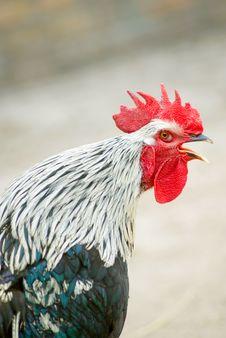 Denying Bird S Flu Stock Image
