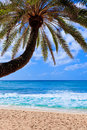 Free Small Palm Tree Hanging Over Stunning Blue Lagoon Royalty Free Stock Image - 22208966