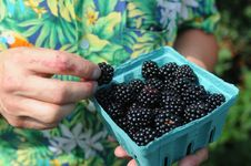 The Blackberry Berry In The Bucket Stock Image