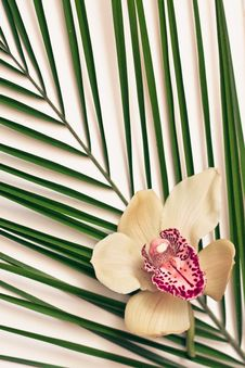 Free Palm Leaves With Orchid Stock Photos - 22213053