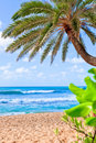 Free Palm Tree Hanging Over Beach. Stock Photography - 22226672