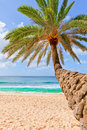Free Palm Tree Hanging Over Beach. Stock Photography - 22226722