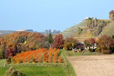 Free Wineyards And Hills Landscape At Robadje - Croatia Royalty Free Stock Photos - 22222538