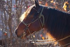 Free Red Horse In The Morning Sun Stock Photos - 22225003