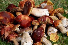 Free Mushrooms Harvest Royalty Free Stock Photos - 22226018