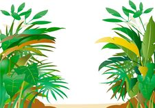 Free Tropical Forest Royalty Free Stock Image - 22228506