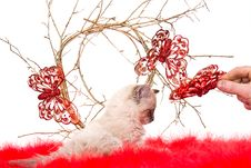 Kitten On A Red Fluffy Cover With Butterflies Stock Photography