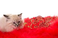 Free Kitten On A Red Fluffy Cover With Butterflies Stock Photography - 22229332