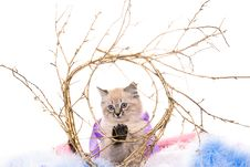 Kitten On New Year S Blue Fluffy Coating Stock Photo
