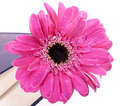 Free Flower In A Closed Book Royalty Free Stock Image - 22235166