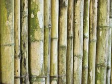 Free Bamboo Stick Stock Photo - 22231730