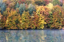 Morning Reflection Of An Autumnal Forest Royalty Free Stock Images