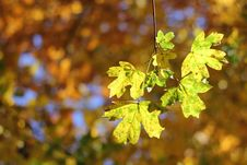 Free Autumnal Details - Colorful Leaves And Bokeh Stock Photography - 22233422