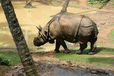 Free Rhinos Stock Image - 22233871