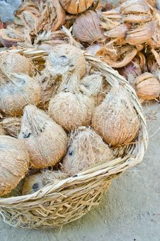 Group Of Coconut In Basket Stock Photo