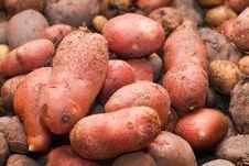 Free Rosamunda Potatoes Royalty Free Stock Images - 22244039