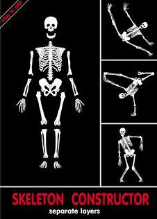 Free Skeleton Constructor. Vector Stock Photos - 22246433