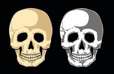 Free Human Skull Vector Stock Image - 22246471