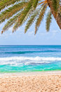 Free Palm Tree Hanging Over Beach. Royalty Free Stock Photo - 22253055