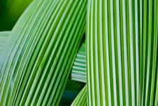 Free Close Up Of Green Leave Royalty Free Stock Image - 22252986