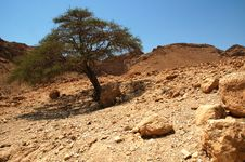 Free Tree In Judaean Desert Stock Photography - 22254542