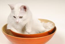 Free Cat Playing In Bowls Royalty Free Stock Photos - 22256688