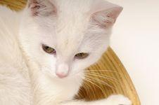 Free Kitten Relaxing In Bowls Stock Photos - 22256693