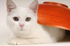 Free Little Cat Portrait Stock Images - 22256744