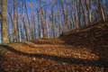 Free Beech Forets Royalty Free Stock Image - 22261966