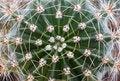 Free Cactus Stock Photo - 22262780