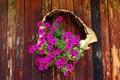 Free Fuchsia Flowers Stock Photography - 22263472