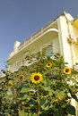 Free Sunflower In Front Of The Villa. Royalty Free Stock Photos - 22266268