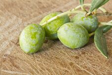 Free Close Up Of Branch Olives Royalty Free Stock Photo - 22260425