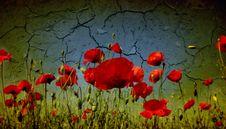 Free Grunge Poppies Background Stock Photo - 22262190