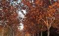 Free Autumn Pathway Stock Photography - 22277122