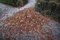 Free Autumn Pathway Stock Photography - 22277132