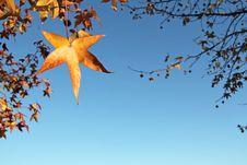 Free Autumn Frame Stock Photo - 22271750