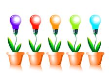 Free Growing Energy Light Bulbs. Royalty Free Stock Photo - 22271965