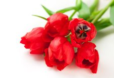 Free Red Tulips Royalty Free Stock Photo - 22288555