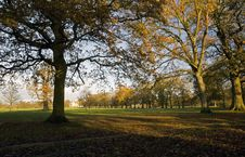 Avenue Of Oak And Ash Trees In Late Autumn Stock Images