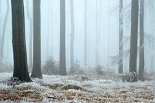 Free In Frosty Beechwood Stock Photography - 22295622