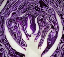 Free Close Up On Red Cabbage Stock Images - 22299414