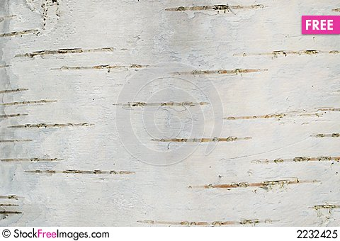 Free Smooth Birch Bark Texture Royalty Free Stock Photo - 2232425