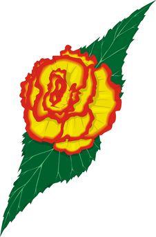 Free Rose Lefe Royalty Free Stock Image - 2230386