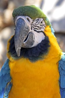 Very Colored Parrot Stock Images