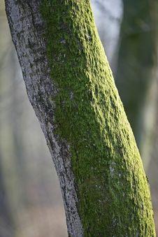 Free Tree Trunk Stock Photo - 2231960