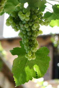Free Bunch Of Grape Stock Image - 2232551