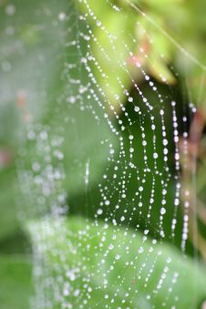 Free The Cobweb Royalty Free Stock Images - 2232639