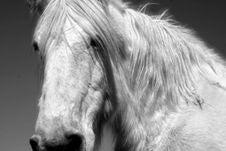 Free Horse Stock Image - 2233421