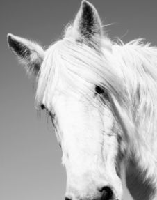 Free Horse Royalty Free Stock Photo - 2233425